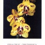 """Fragile orchidea""  di Wanda Allievi"