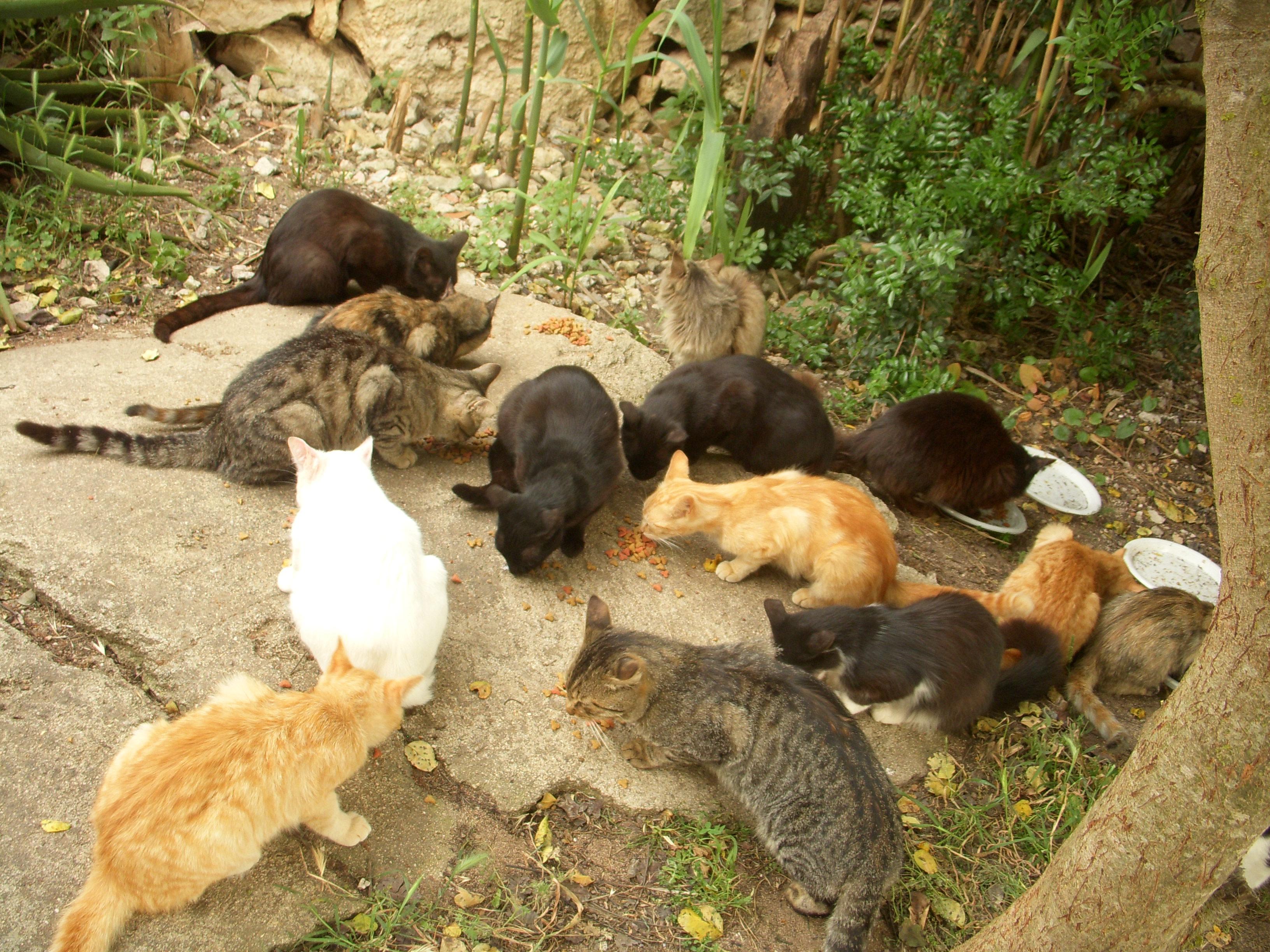 Dove i gatti scendono in spiaggia: Colonia Felina di Su Pallosu in Sardegna