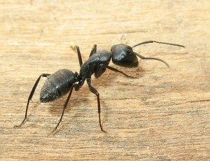 """""""L'uomo morsicato da una formica ed Ermes"""" di Esopo"""