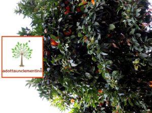 Adotta un Clementino - Calabria