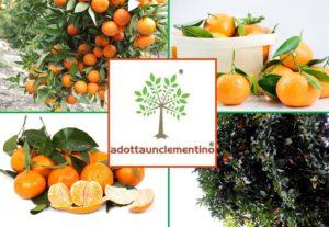 Adotta un Clementino online