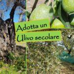 Adotta un Ulivo: la proposta green dell'azienda calabrese di Corigliano Rossano