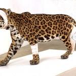 """""""Animals – A different perception"""", mostra di Pascal Bernier, dal 12 al 31 dicembre, Torino"""