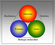Biologia molecolare - Biochimica - Genetica - Photo by Wikipedia