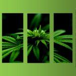 Olio di CBD: un rimedio naturale contro ansia, stress, insonnia, e molti altri disturbi