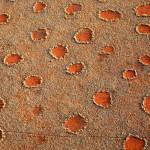 Cerchi delle fate in Namibia: scoperta la vera causa, sono le termiti