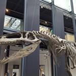 """""""Dinosauri. Giganti dall'Argentina"""" in mostra al Centro Culturale Altinate San Gaetano, sino al 26 febbraio 2017, Padova"""