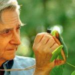"""""""Le origini profonde delle società umane"""" di Edward O. Wilson: le penultime domande avranno mai una risposta?"""