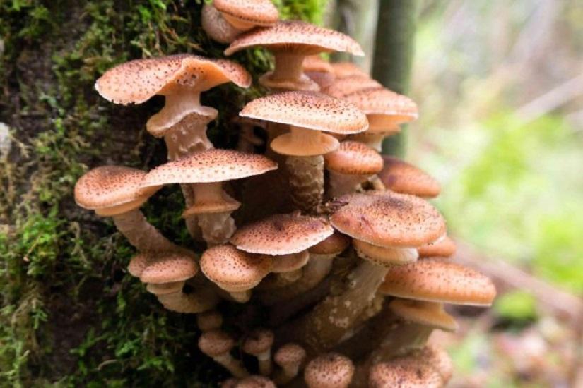 Citazioni sui funghi: buoni, belli, colorati, tanti, ricchi di varietà, e talvolta… letali