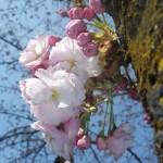 Giornata mondiale della poesia 2013: la primavera celebra i dolci versi