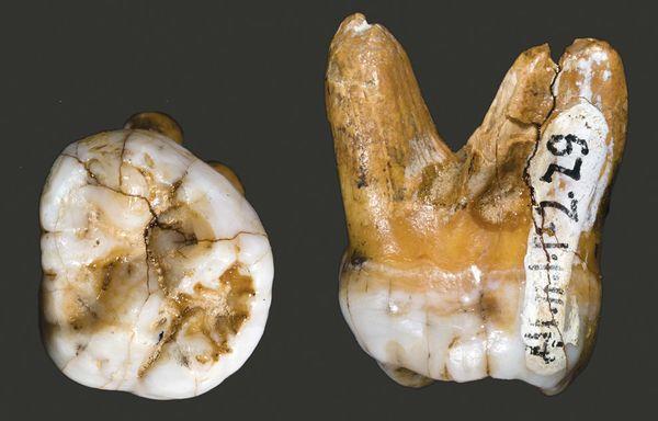 Homo di Denisova: una nuova specie che avrebbe convissuto con l'Homo di Neanderthal