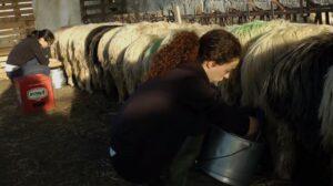 In questo mondo - Anna Kauber - donne pastore Sardegna
