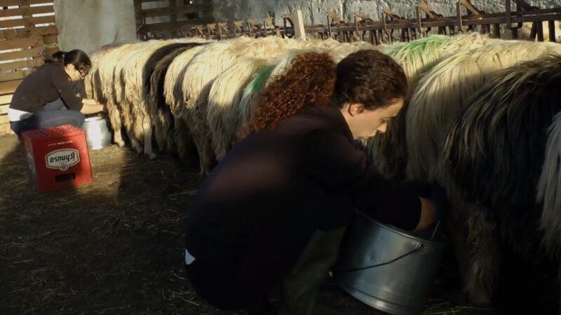 """""""In questo mondo"""", docufilm di Anna Kauber: le donne pastore, realtà italiana poco conosciuta"""