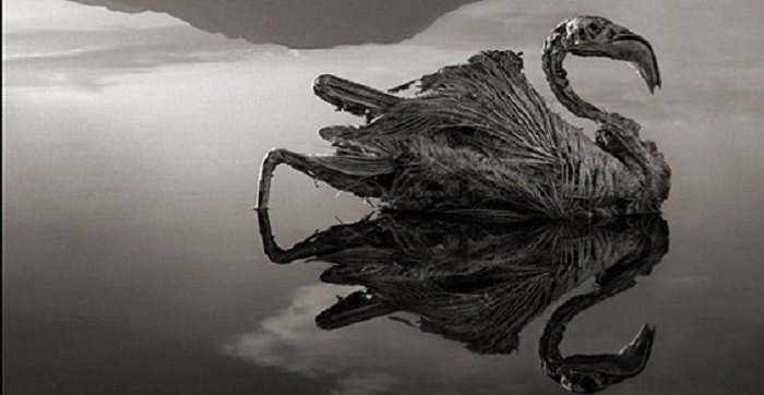 Lago Natron in Tanzania: trasforma gli animali in statue di pietra