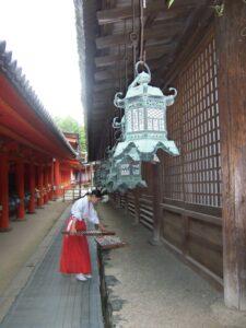 Miko al Santuario di Kasuga - Photo by Chris Gladis