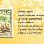 """""""Piante di energia"""" di Haria: alcune citazioni tratte dal libro edito da Rupe Mutevole Edizioni"""