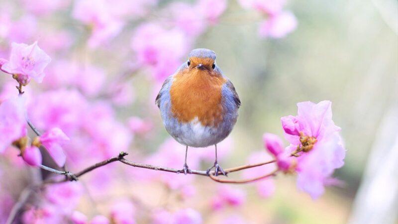 Primavera: ecco 10 parole inglesi per descriverla