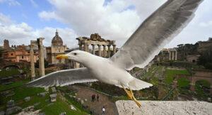 Roma - Gabbiano - Photo by Sputnik Italia