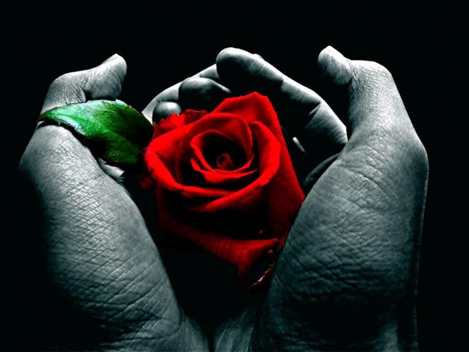 Riflessioni sullo stupro: il tempo, le rose e le scelte