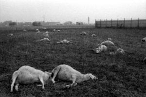 Seveso - diossina sugli animali