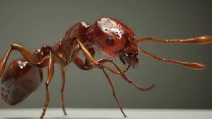 Solenopsis invicta Buren - Formiche di fuoco
