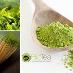 Il tè Matcha: una storia di benessere lunga 1500 anni