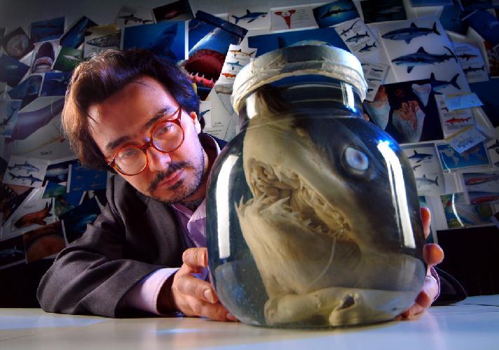 Intervista di Cristina Biolcati ad Alessandro De Maddalena: uno dei maggiori esperti sugli squali