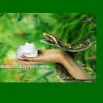 Nel veleno di una rara vipera birmana il segreto dell'eterna giovinezza