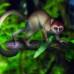 Trovato punto di unione tra uomo e scimmia: Archicebus Achilles sarà il famoso anello mancante?