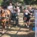 8^ Edizione della Mostra mercato del bestiame, dei cereali e dei prodotti tipici ad alta quota, dal 26 al 28 luglio 2019, Monteleone di Spoleto