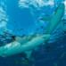 Isola La Reunion: squalo attacca ed uccide una quindicenne a pochi metri dalla riva