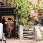 """""""The milk system"""" di Andreas Pichler: l'idea che le mucche sono sempre meno mucche"""