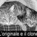 Crazy: Clonano un gatto con una fotocopiatrice modificata da due bidelli bolognesi candidati al Nobel