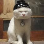 Il Gatto: la sua domesticazione avvenne in Cina 5500 anni fa