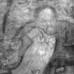 """""""La Stanza Blu"""" di Pablo Picasso: dietro il celebre dipinto si nasconde un uomo barbuto in atteggiamento pensoso"""