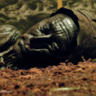 Pratiche di mummificazione in America ed Europa: differenze e somiglianza