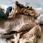 Pratiche di mummificazione in Africa, Asia, Australia ed Oceania: differenze e somiglianze