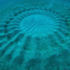 Cerchi subacquei sul fondo dell'oceano: sono opera del pesce palla
