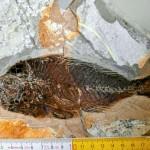 Scoperto in Canada un nuovo giacimento di fossili: specie sconosciute risalenti al periodo Cambriano