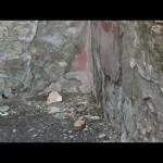 Pompei continua a crollare: pochi giorni fa si è sgretolato uno stucco antico